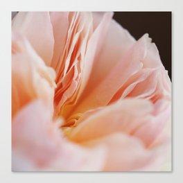 English Rose #1 Canvas Print