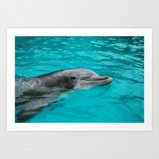 Dolphin.  Art Print
