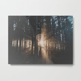 Sun Rays through Trees Metal Print