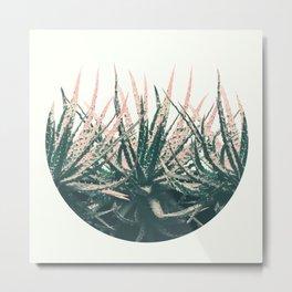 Succulent bowl desert Metal Print