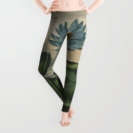 Temple of Flora Blue Egyptian Water Lily Leggings