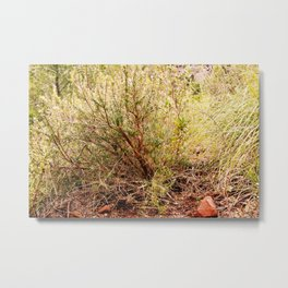 Forest is waking up Metal Print