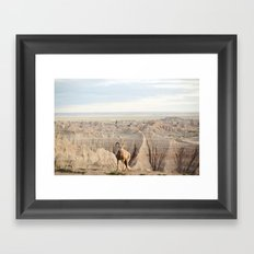 Badland Bighorn Sheep Framed Art Print