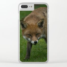 Wild Red Fox Clear iPhone Case