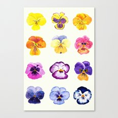 colorful pansies watercolor painting Canvas Print