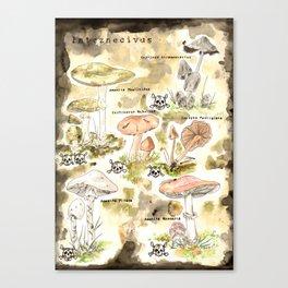 Poisonous mushrooms Canvas Print