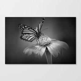 Butterfly B&W Canvas Print