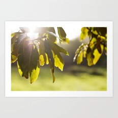 leaves at sunset Art Print
