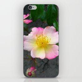 wild rose IV iPhone Skin