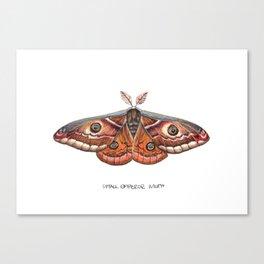 Small Emperor Moth (Saturnia pavonia) Canvas Print