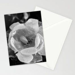 Little Petals Black and White Print Stationery Cards