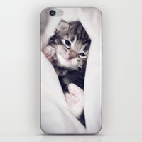 blankets iPhone & iPod Skins featuring Baby kitten in blankets by JosignArt