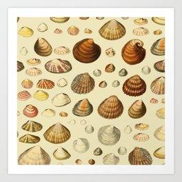 Vintage Shells Art Print