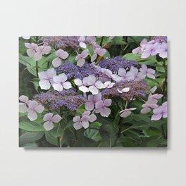 Hydrangea Violet Hues Metal Print