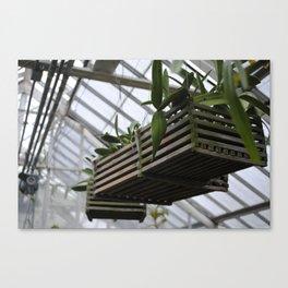 Hanging Plants Canvas Print