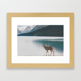 Bowman Lake Visitor Framed Art Print