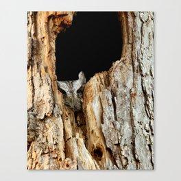 Little screech owl eyes open Canvas Print