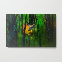 Deer in Velvet Metal Print