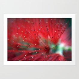 Callistemon macro 2413 Art Print