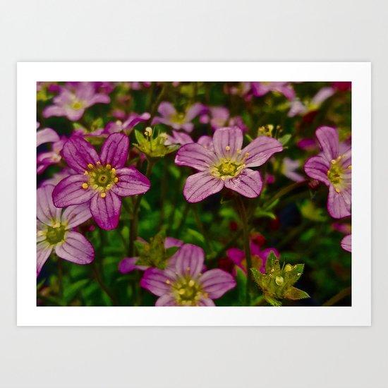 Sweet Little Pink Flowers Art Print