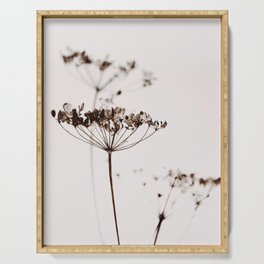 DRIED FLOWERS ANETUM 2A Serving Tray