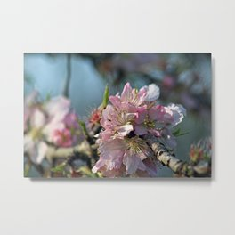 Flowering Branch Pink Almond Blossoms Sakura Floral Macro Metal Print