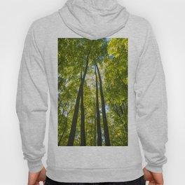 Trees of Michigan -3 Hoody