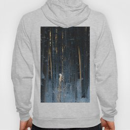 Light In The Forest Hoody