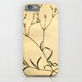 Flower 1448 gypsophila repens Creeping Gypsophila10 iPhone Case