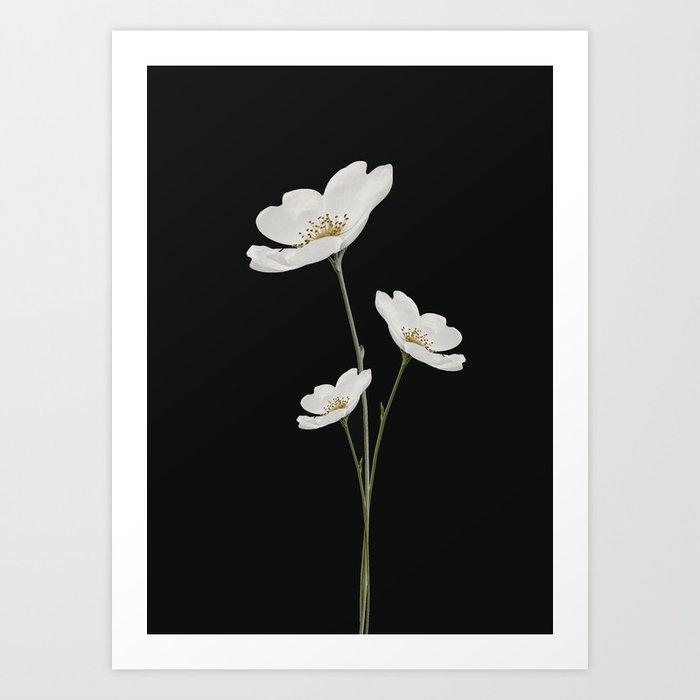 Flowers 5 Kunstdrucke