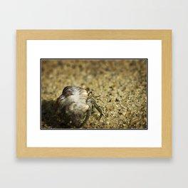 Hermit the Crab Framed Art Print