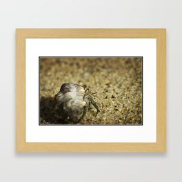 Hermit the Crab Framed Art Print