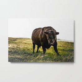 Big Black Angus Bull Metal Print