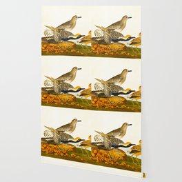 Grey plover John Audubon vintage scientific bird illustration Wallpaper