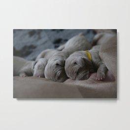 Cute puppy by Nathalie SPEHNER Metal Print