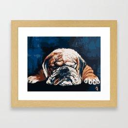 Bull Dog Framed Art Print