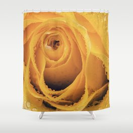 Yellow rose with water drops Shower Curtain