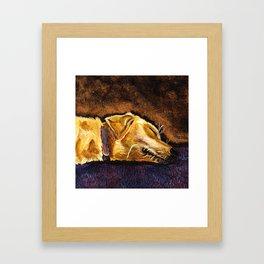 Sleepy Yellow Lab Framed Art Print