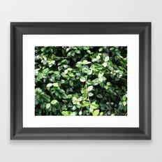 Wall of leaves Framed Art Print