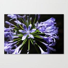 Purple Perennials Canvas Print