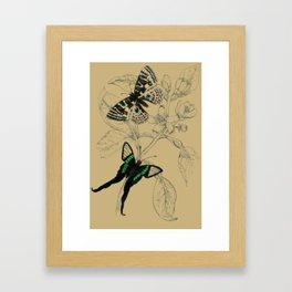 Scientific Colorful Butterflies Framed Art Print