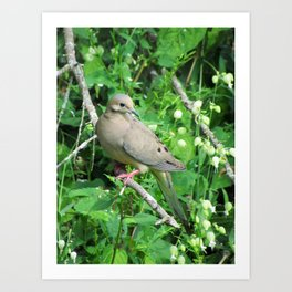 Gentle Female Mourning Dove Art Print