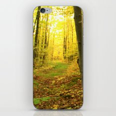 Autumnal Pathway iPhone & iPod Skin