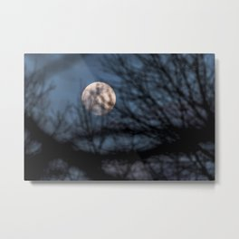 Full worm moon though the branches Metal Print