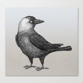 Western jackdaw pencildrawing Canvas Print