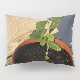 Resilient Pillow Sham