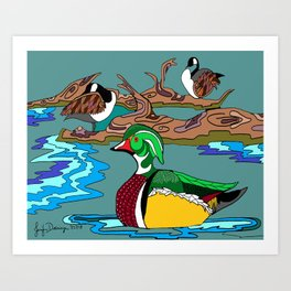 Wood Duck and Canadian Geese Art Print