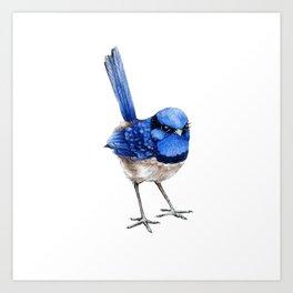 Splendid Fairy Wren, Blue on White Art Print