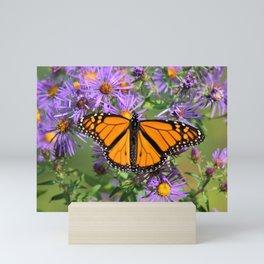 Monarch Butterfly on Wild Aster Flower Mini Art Print