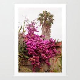 Fuchsia Garden Art Print